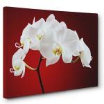Floral ve Çiçek Tabloları 4